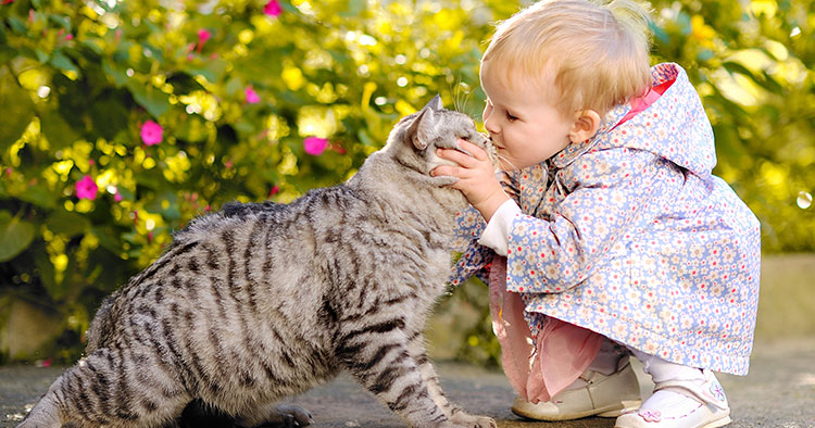 Baby kissing a cat