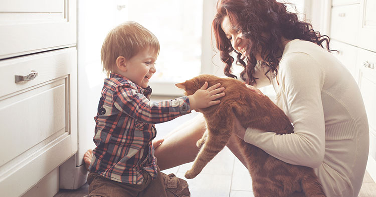 Toddler playing with cat